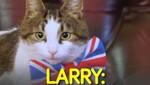 Larry: Chú mèo quyền lực nhất thế giới