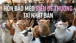 Hòn đảo mèo siêu dễ thương tại Nhật Bản