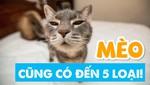 Mèo cũng có đến 5 loại