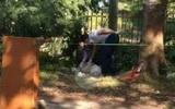 Hà Nội: Người đàn ông tử vong dưới gốc cây chưa có người thân đến nhận