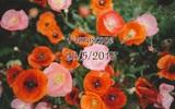Chủ nhật của bạn (23/5): Ma Kết cần được thư giãn đúng nghĩa