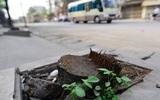 Hà Nội: Hàng chục cây xanh dọc quốc lộ 32 bị chặt hạ để chỉnh trang vỉa hè