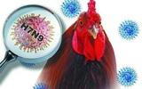 Chủng virus cúm gia cầm H7N9 đang có sự biến đổi nguy hiểm hơn, người hay ăn thịt gà cần lưu ý những gì?