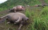 Yên Bái: Một phụ nữ đi chăn trâu bị sét đánh tử vong đúng lúc trời mưa giông