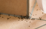 Không cần hóa chất vẫn có thể đuổi sạch bong lũ bọ, kiến, gián trong nhà, bạn chỉ cần duy nhất một thứ...