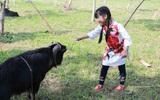 Cuối tuần, trẻ nhỏ được cha mẹ dẫn đi xem lễ hội chọi dê Hà Giang độc đáo ngay tại Hà Nội