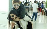 Trương Quỳnh Anh quậy tưng bừng khi cõng Tim giữa sân bay