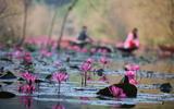 Đâu chỉ có lá vàng, thu Hà Nội còn là mùa nước nở hoa tím, đẹp lịm tim thế này