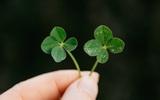 5 câu chuyện nhỏ trùng hợp đến khó tin khiến bạn phải suy nghĩ khác về sự may mắn