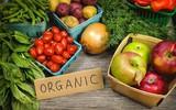 Thực phẩm organic – Xu hướng ăn uống được lòng người tiêu dùng thông thái