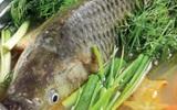 Có nên nuốt mật cá trắm chữa bệnh?