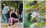 17 ngày nữa là hết năm, người Hà Nội ngỡ ngàng bắt gặp hoa ban trái mùa khoe sắc trong giá rét