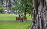 Trong nắng, Sài Gòn vẫn có những khoảnh khắc lắng dịu mát