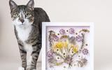Nhà bạn sẽ ấn tượng hơn với bức tranh hoa khô tự làm