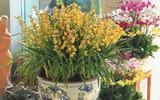 Các loại hoa ngày Tết mang lại may mắn và hạnh phúc cho gia chủ