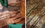 Phát hiện nhiều bọ rệp, cặp vợ chồng không ngờ nơi chúng trú ngụ lại là chỗ họ nằm ngủ hằng ngày