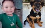 Mua dây chuyền thẻ tên cho con trai, mẹ trẻ không ngờ order đúng cửa hàng dành cho thú cưng
