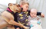 Tan chảy với hình ảnh ngủ trưa của hai nhóc con và chú chó Theo nổi tiếng