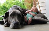 30 bức ảnh ngộ nghĩnh về tình bạn của các nhóc tỳ và cún cưng