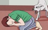 Dạy con những điều này ngay để không bị chó tấn công trước khi quá muộn