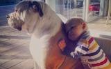 21 bức ảnh yêu ơi là yêu cho thấy mọi trẻ em nên có một con vật cưng