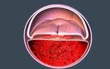 Khám phá sự hình thành phôi thai và các bộ phận trên cơ thể bé
