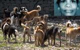 Con bất lực nhìn mẹ bị 100 con chó hoang cắn xé tới chết ngay trước mắt