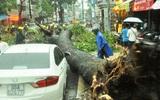 Mưa lớn ở Sài Gòn, hàng chục người giải cứu nạn nhân bị cây cổ thụ đè bất tỉnh