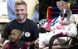 David Beckham hô biến thành thỏ trắng ngộ nghĩnh
