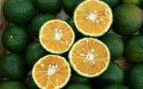 5 loại cam ngon nức tiếng, đã nếm một lần thì khó mà quên