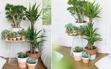 9 ý tưởng bài trí cây cảnh trong nhà đơn giản nhưng