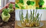 8 loại rau củ có khả năng tái sinh giúp gia đình có rau ăn quanh năm suốt tháng