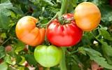 Những thực phẩm giúp bạn tránh xa bệnh tật