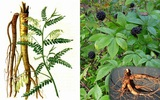 Các loại thảo mộc có tác dụng trị mụn rộp herpes