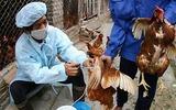 Xuất hiện chủng virus cúm gia cầm mới A/H5N6