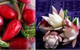 Mách bạn cách tỉa hoa cơ bản nhất từ củ cải đỏ