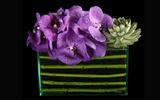 Cách cắm hoa lan đơn giản mà tinh tế