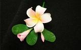 Đi lễ hội đầu năm với cài áo hoa sứ tuyệt đẹp
