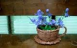 Tách nở hoa handmade trang trí nhà ngày xuân