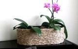 Cách cắm hoa lan mộc mạc trang trí nhà mình