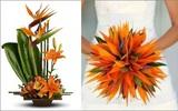 Hướng dẫn 5 cách cắm hoa thiên điểu độc đáo