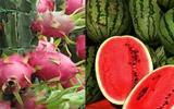 Cứ thoải mái ăn 6 loại quả này mà không sợ hàng Trung Quốc vì chỉ xuất khẩu chứ không nhập