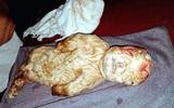Con dê có mặt giống hệt đứa trẻ sơ sinh gây sốc