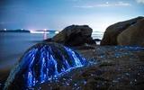 Kỳ lạ hàng ngàn con tôm phát sáng như kim cương trên bờ biển
