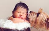 Khoảnh khắc bình yên tuyệt đẹp của bé sơ sinh bên cún cưng