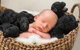 Bộ ảnh tuyệt đẹp của bé trai và bầy cún cưng sinh cùng ngày