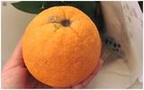 """Hoang mang vì cam """"xịn"""" mua từ Tết, để hơn 8 tháng vẫn tươi ngon không thối hỏng"""