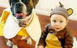Bộ ảnh hóa trang Halloween chụp suốt 5 năm của bé trai và cún cưng