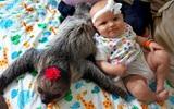Bộ ảnh đáng yêu về tình bạn của cô bé 5 tháng tuổi và chú thú lười