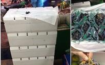 Hà Nội: Sau nho móng tay, lại xuất hiện nho đen không hạt giá siêu rẻ, chỉ 4.000 đồng/kg